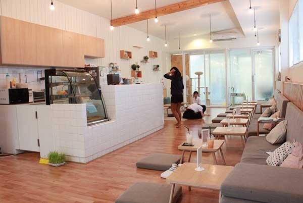 Cataholic-Cafe